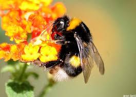 bumble bee pinata bumble bee pinata childrens pinatas kitchen dining