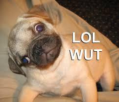 Lol Wut Meme - wut dog meme dog best of the funny meme