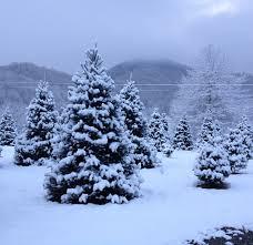 smoky mountain christmas tree farm waynesville nc maggie
