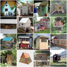 Easy Backyard Chicken Coop Plans by 6 Considerations Before U Start A Chicken Coop The Poultry Guide