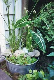 native british pond plants planting tips u0026 ideas for a container water garden the claudia