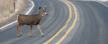 michigan deer accident attorneys call lee free