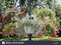 flowers garden city quebec city canada universite laval jardin roger van den hende