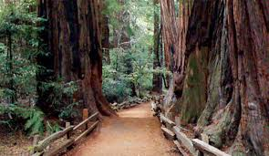 San Francisco Big Bus Tour Map by Muir Woods Giant Redwoods Tour Bay City Guide San Francisco