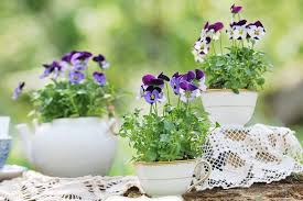 potted flowers potted plant wedding reception flowers mywedding