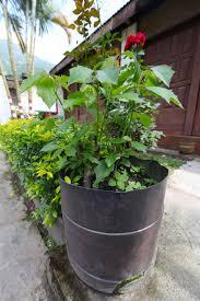 diy planters 5 diy planters from the himalaya trash backwards blog