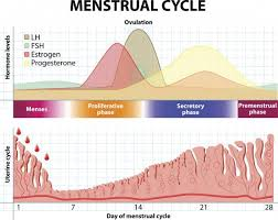 Light Bleeding Before Period Can You Have Your Period And Still Be Pregnant Lovetoknow