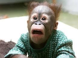 Baby Monkey Meme - cute baby monkey id 48391 buzzerg