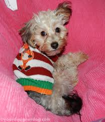 an ugly christmas sweater flashback friday yourdesignerdog