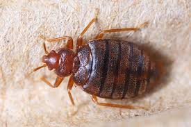 How To Avoid Bed Bugs How To Avoid Bed Bugs While Travelling