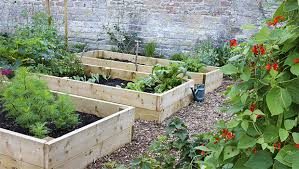 attractive starting vegetable garden how to start a creative home