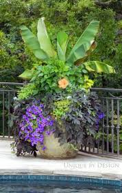 flowers container gardening flowers and gardens