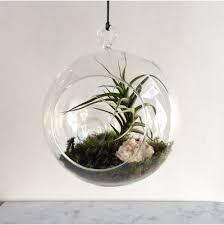 medium air plant terrarium