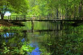 South Carolina natural attractions images 14 epic hiking trails in south carolina jpg