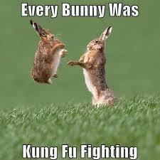 Meme Kung Fu - every bunny was kung fu fighting meme boomsbeat