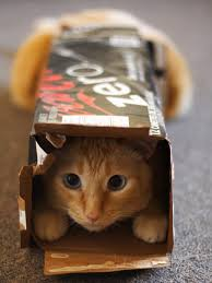 Why Do I Go To The Bathroom So Much What U0027s Up With That Why Do Cats Love Boxes So Much Wired