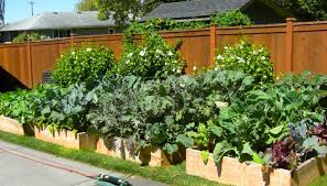 plant how to grow vegetables all year long even in winter