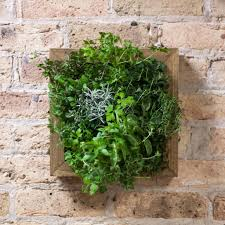 Countertop Herb Garden by Herb Garden Kit Practical And Enjoyable Herb Garden U2013 Gardening