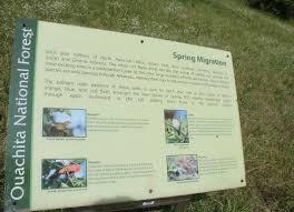 plants native to arkansas mauldin fields walking trail montgomery co arkansas