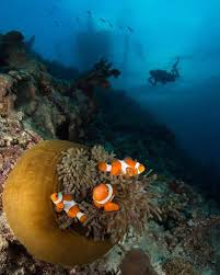 http www deepbluediving org scuba gloves under the sea