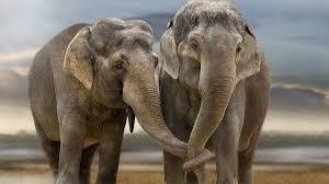 baby elephant wallpaper hd