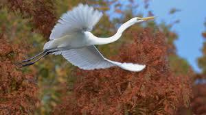 new zealand birds native animal conservation