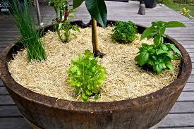 perennial herbs for balcony garden 516 hostelgarden net