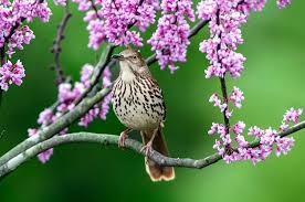 bird mimics and mimicry three birds to birds and blooms