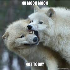 Moon Moon Memes - no moon moon not today make a meme