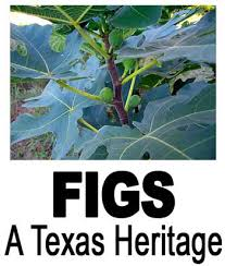What Fruit Trees Grow In Texas - figs a texas heritage