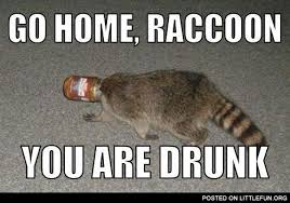 Raccoon Meme - littlefun go home raccoon you are drunk