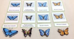 classroom ideas for a butterfly unit