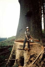 130 best woodcutting images on pinterest lumberjacks logging