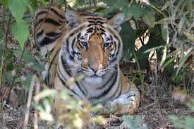 Wild Animals images Top 10 wild animals of india jpg