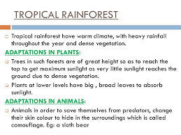 Adaptations Of Tropical Rainforest Plants - adaptation in terrestrial plants and animals ppt video online