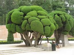 Topiary Cloud Trees - 842 best topiaries hedges and mazes u0026espaliers images on pinterest