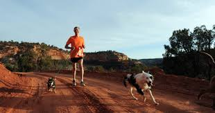 australian shepherd ultra marathon 71 year old ceo to run 170 miles to save shelter pets dogtime
