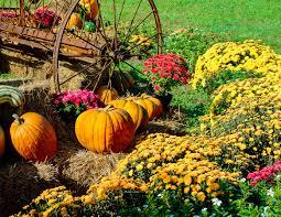 new jersey garden supply blog gardening tips u0026 advice