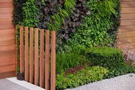 Climbing Plants For North Facing Walls - green walls rhs gardening