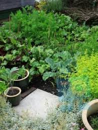 69 best container gardening images on pinterest container