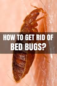 What Kills Bed Bug Eggs How To Get Rid Of Bed Bugs At Home How To Kill Bed Bugs