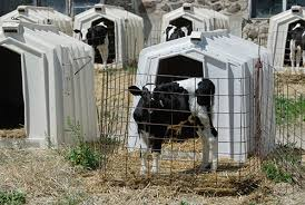Calf Hutches For Sale Questions U2014 American Veal Association
