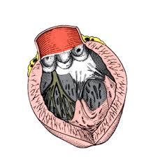 chambre de chasse fmpmc ps anatomie du cœur humain niveau pcem2 eia cardiologie