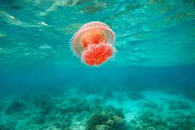 jellyfish wallpapers group 87