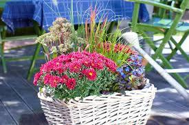 balkon grã npflanzen balkonpflanzen für den herbst gartentechnik de