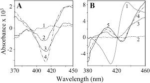 biosynthesis of the cyanogenic glucosides linamarin and