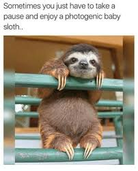 Memes Sloth - sometimes you just have to take a pause and enjoy a photogenic baby