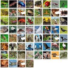best 25 animal coverings ideas on pinterest animal categories