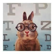 rabbit poster rabbit posters at allposters