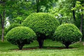 garden design garden design with precision cut lawn service